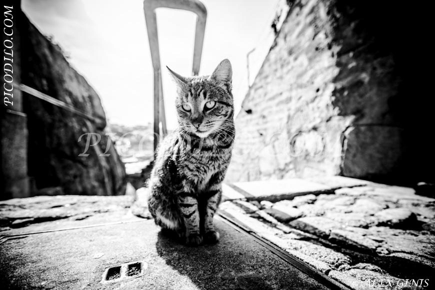 Acrylglasbilder, Leinwandbilder, eigenes Foto auf Leinwand und Acrylglas, Alu-Dibond. Motiv: Griechenland. Katzenspiel